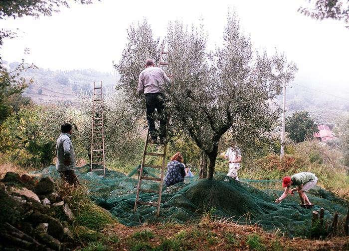 La Dolce Vita 10 Garden Ideas To Steal From Italy Gardenista
