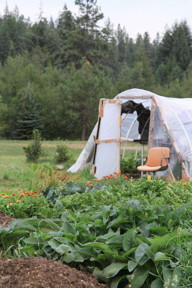 mulch-compost-comfrey-hoop-house-gardenista