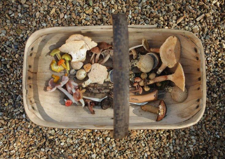 mushroom-trug-2