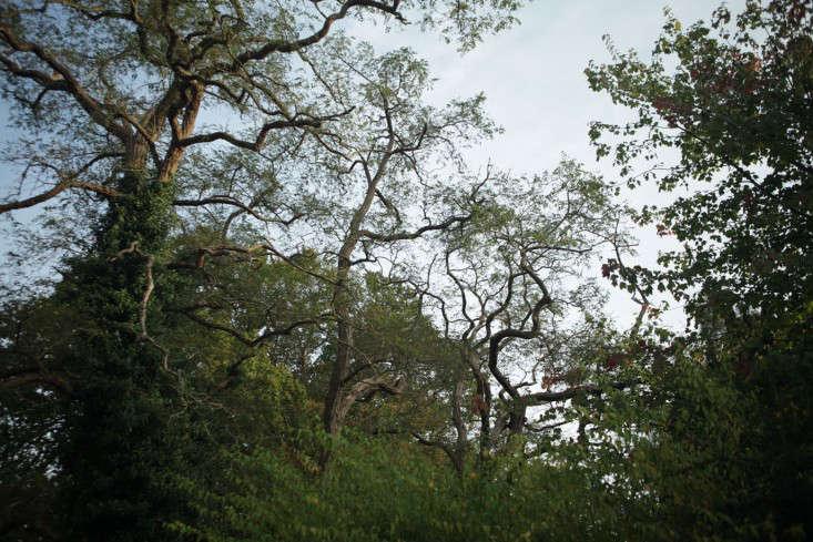 mushroom-woods-sky
