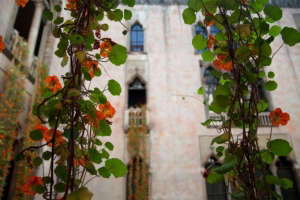 nasturtium vines at the isabella stewart gardner museum | gardenista