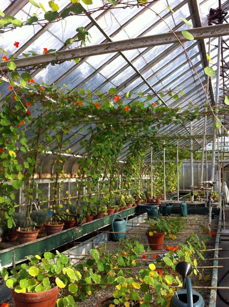 nasturtiums-6-isabella-stewart-gardener-museum-gardenista