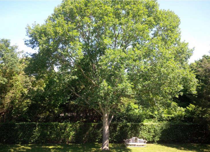 nevins-deborah-bench-gardenista
