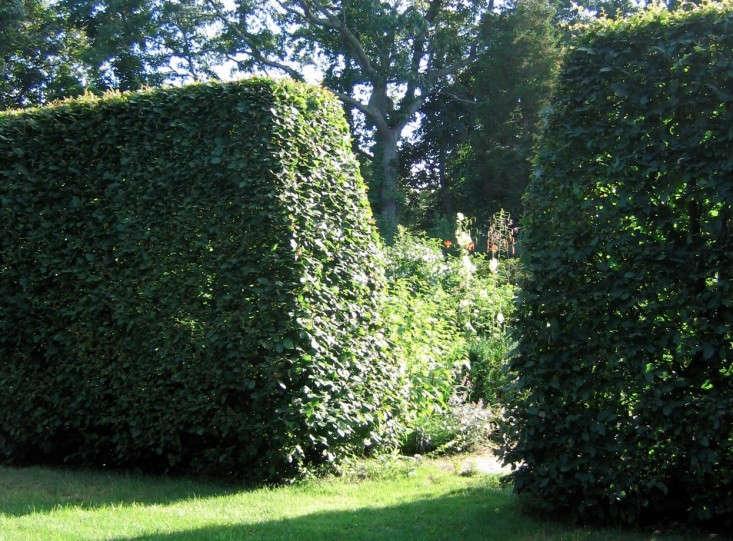 nevins-deborah-hornbeams-gardenista