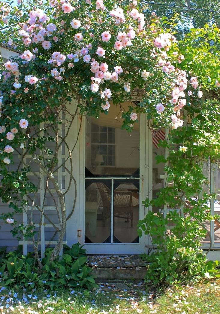 9 Ways To Create Curb Appeal With Flowering Vines And