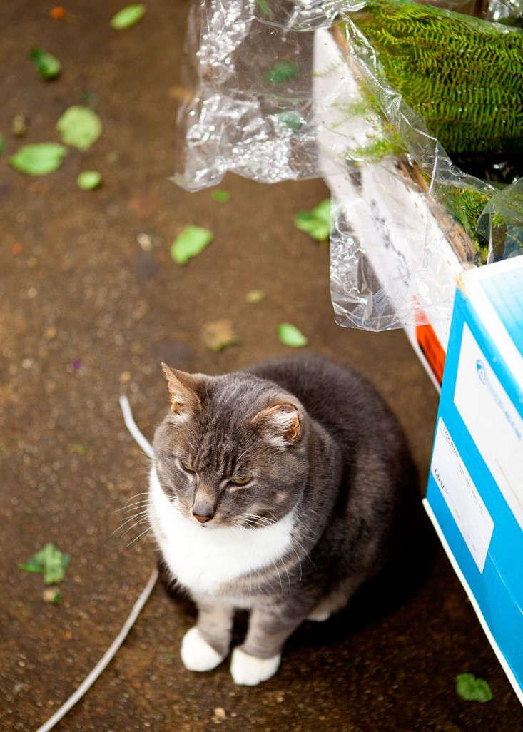 nyc-flower-market-24-rebecca-baust-gardensita