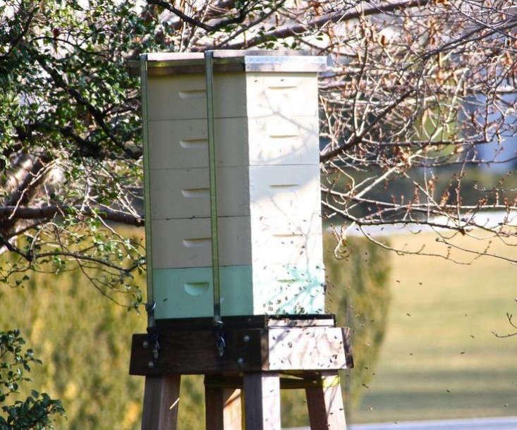 oama-white-house-garden-beehives-gardenista