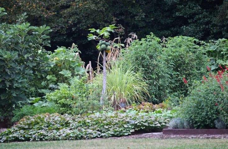 obama-white-house-edible-garden-flowers-gardenista