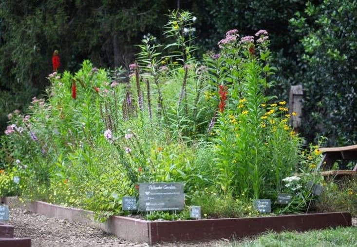 obama-white-house-garden-pollinator-plants-gardenista