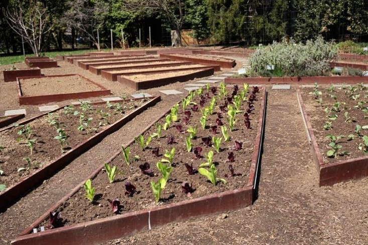 obama-white-house-garden-spring-2015-lettuce-gardenista