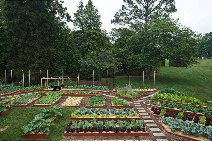 Image Result For Abc Of Vegetable Gardening