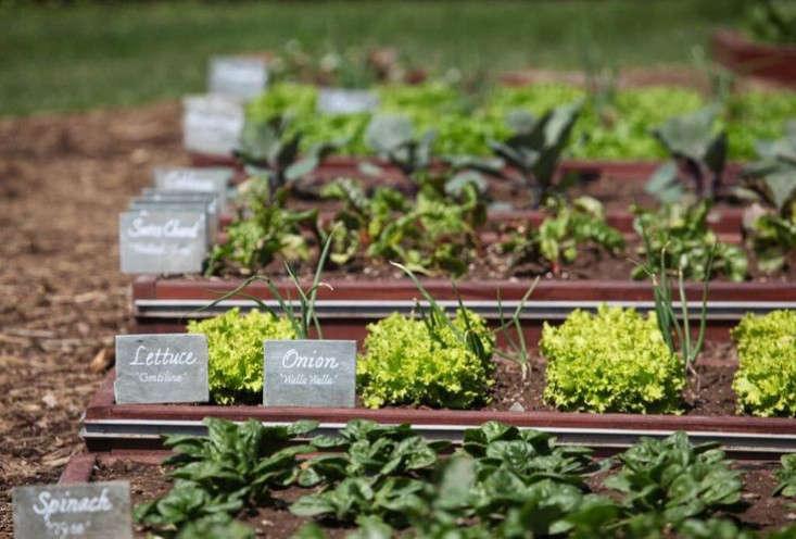 obama-white-house-vegetable-garen-early-spring-plants-gardenista