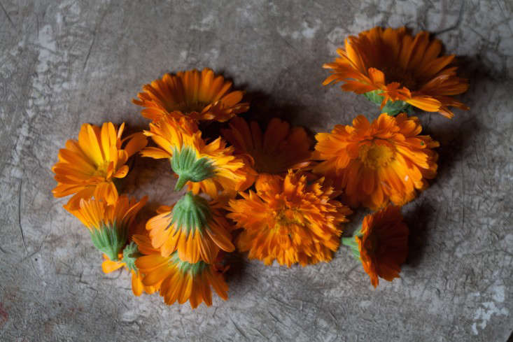 obercreek-calendula-meredith-heuer-gardenista-22