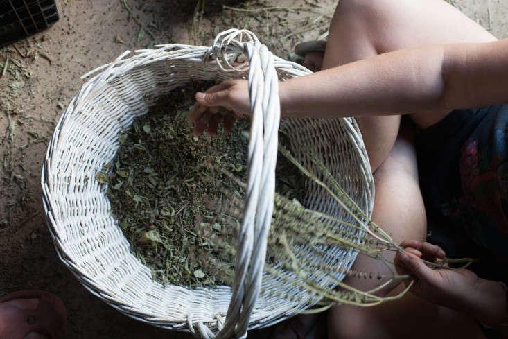 obercreek-calendula-meredith-heuer-gardenista-4