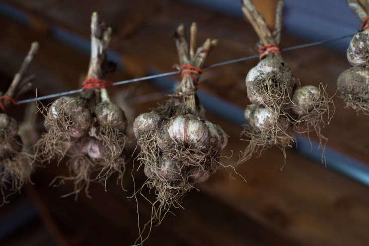 obercreek-calendula-meredith-heuer-gardenista-7