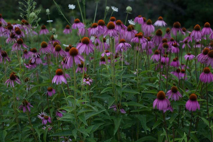 obercreek-calendula-meredith-heuer-gardenista-8