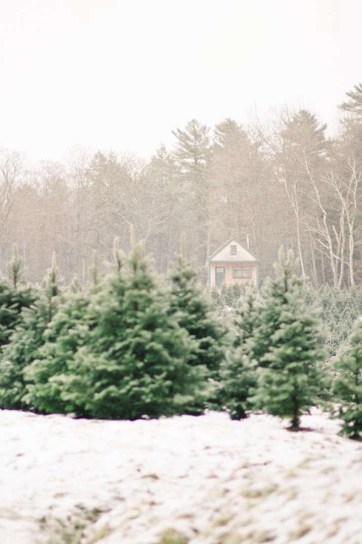 old-farm-christmas-tree-farm-Justina-Bilodeau-gardenista-0003
