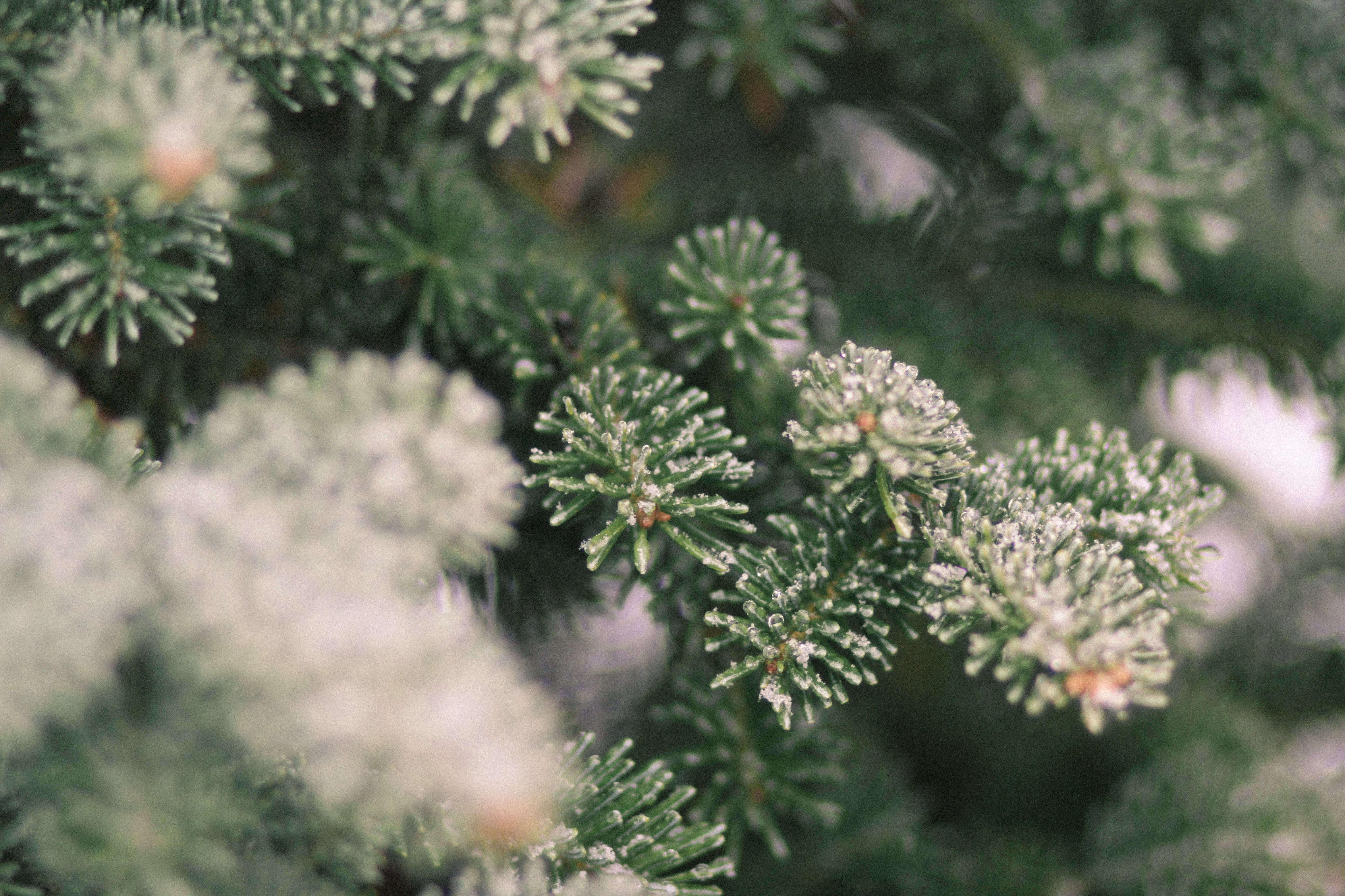 old-farm-christmas-tree-farm-Justina-Bilodeau-gardenista-0025