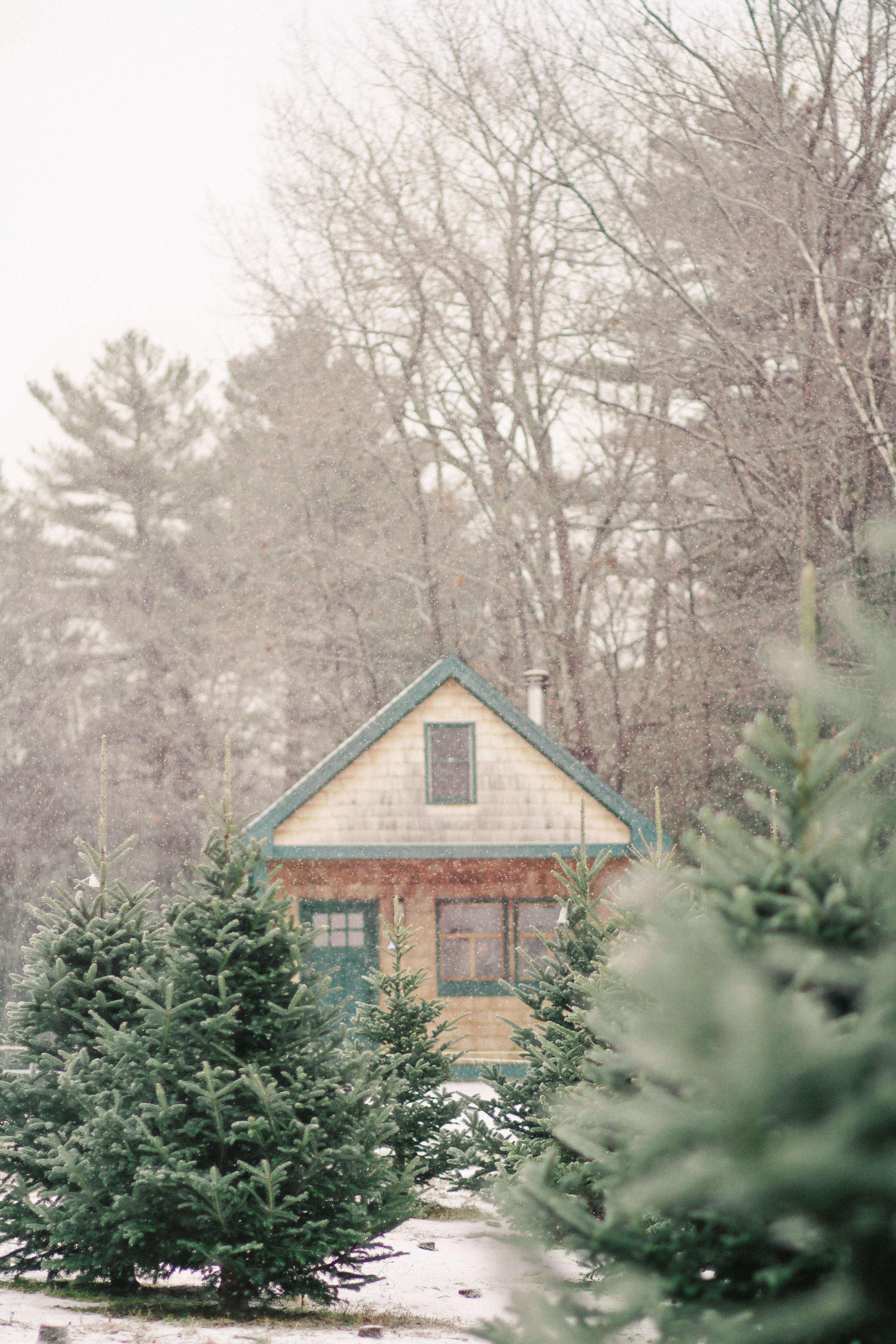 old-farm-christmas-tree-farm-Justina-Bilodeau-gardenista-0053