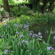 old-rectory-pond-iris