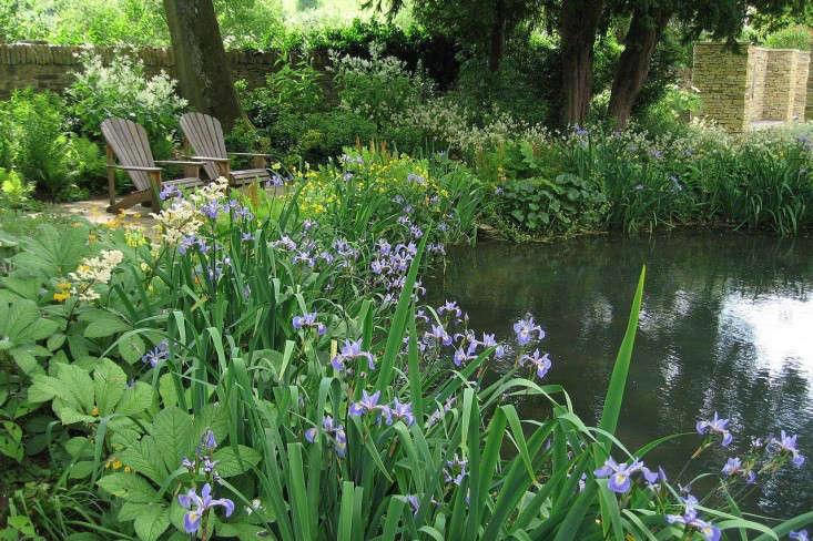 old-rectory-pond-iris