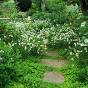 old-rectory-white-planting