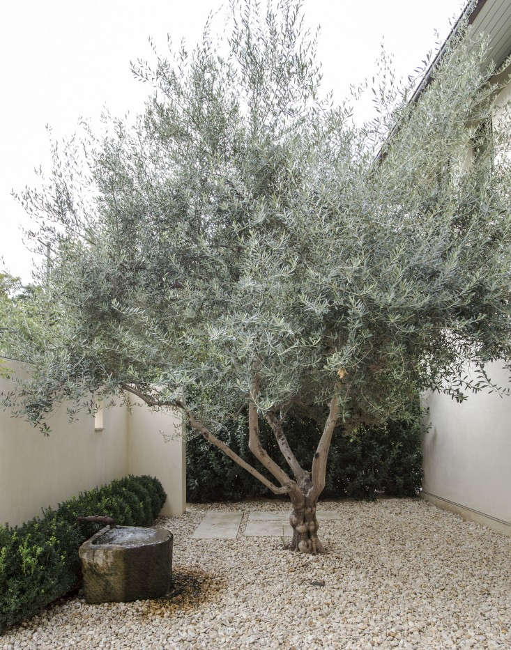 Simple landscaping ideas 10 genius gardens with an olive for What to plant under olive trees