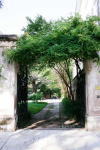 peek through a gate in charleston by olivia james