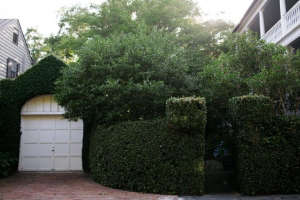 topiary and espalier in charleston by olivia james