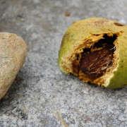 open-walnut-liane-tyrell-gardenista