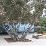 orange-street-studio-landscape-with-large-tree-gardenista