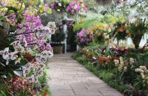 orchid-show-orchid-avenue-marie-viljoen-gardenista