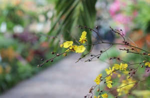 orchid-show-oncidium_dancingladies-marie-viljoen-gardenista.