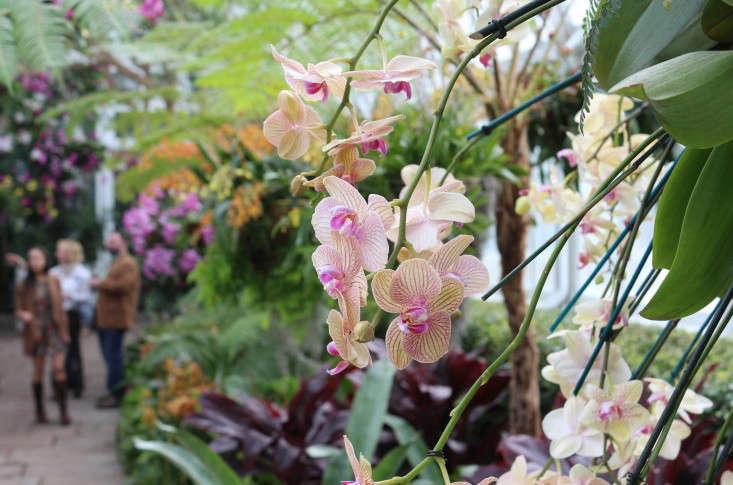 orchid-show-phalaenopsis-marie-viljoen-gardenista