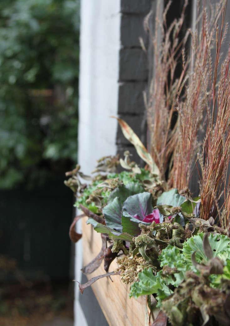 ornamental-kale-13-erinboyle-gardenista