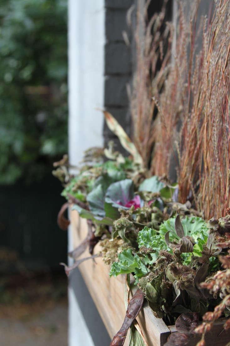 ornamental-kale-14-erinboyle-gardenista