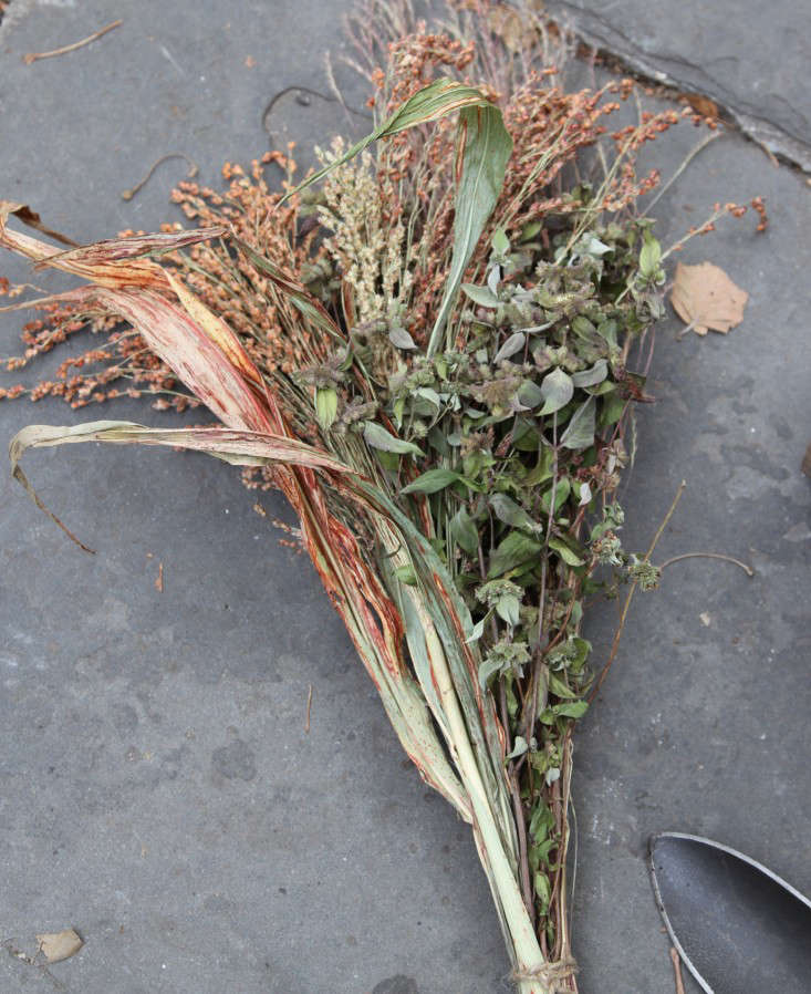 ornamental-kale-4-erinboyle-gardenista