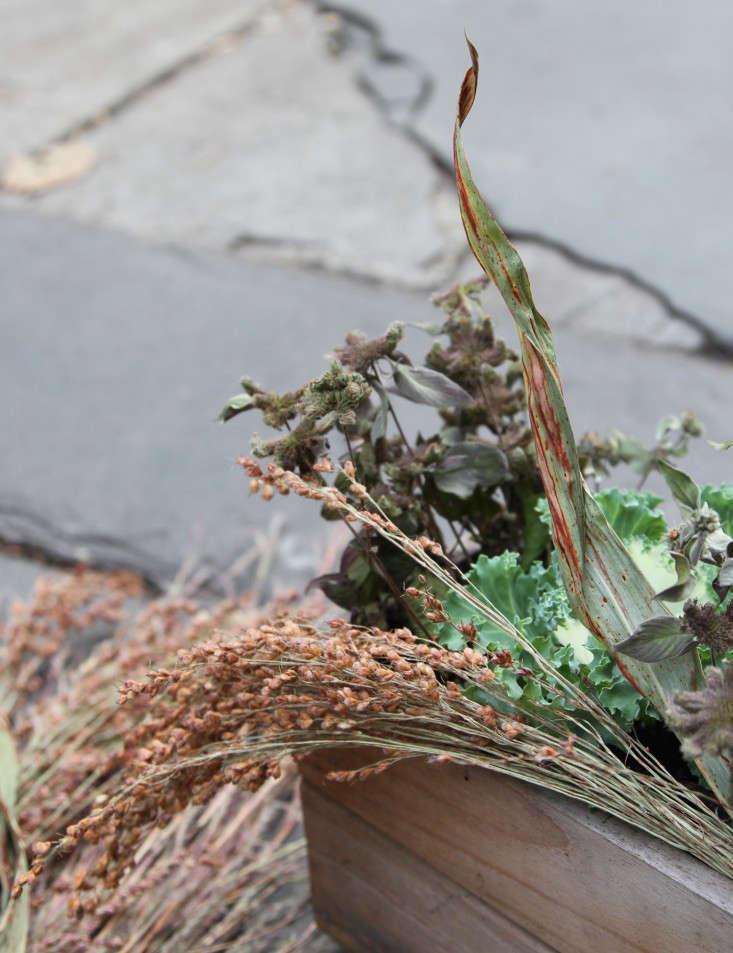 ornamental-kale-6-erinboyle-gardenista