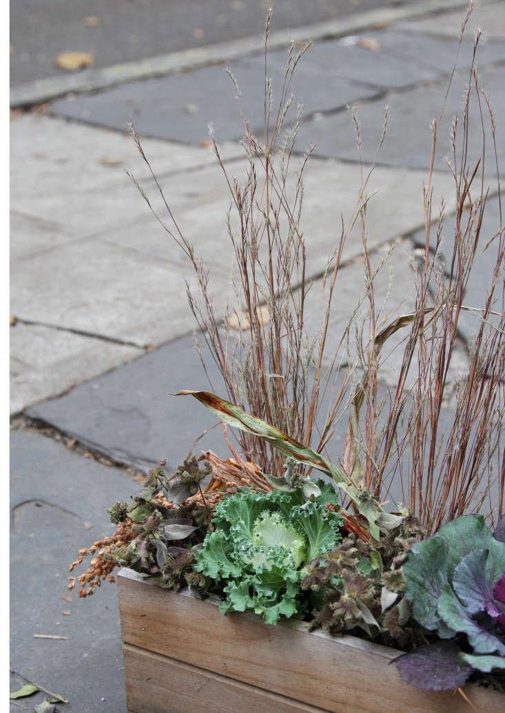 ornamental-kale-8-erinboyle-gardenista