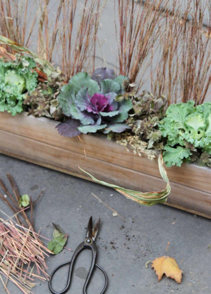 ornamental-kale-9-erinboyle-gardenista