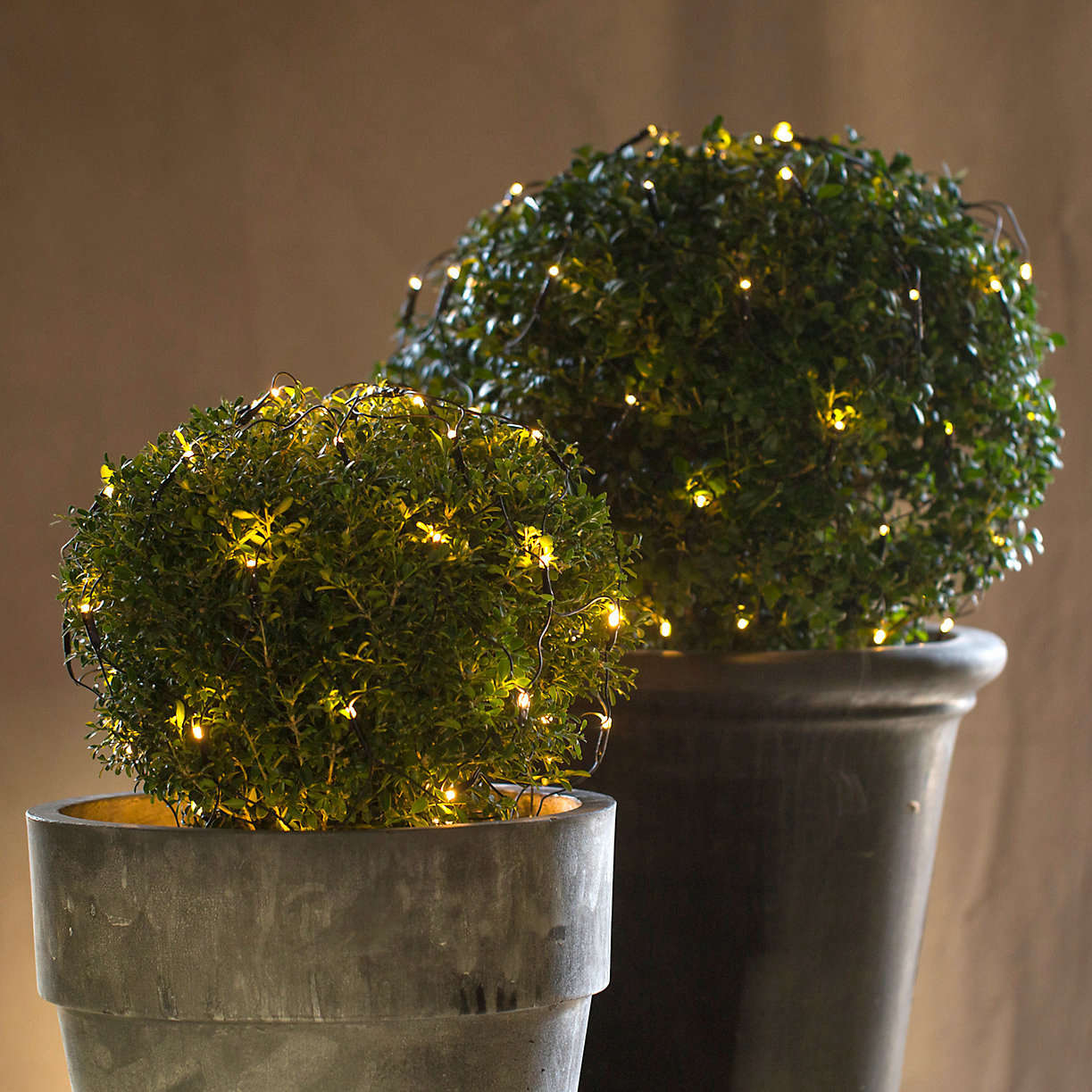 outdoor-holiday-lights-boxwood-netting-gardenista