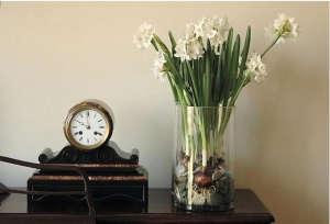 Paperwhite bulbs ; Gardenista