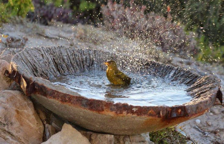 paternoster-cape-weaver-marie-viljoen-birdbath-gardenista