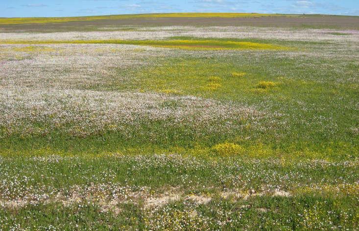 paternoster-west-coast-spring-marie-viljoen-gardenista