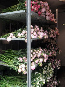 Peonies in the cooler at Dancing Moon Farm ; Gardenista