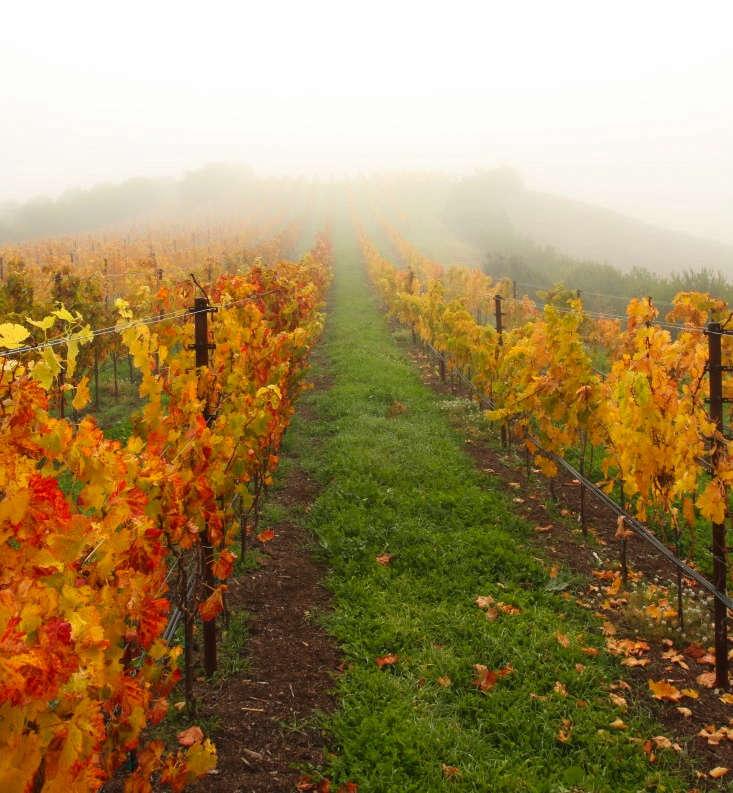 petaluma-mcevoy-ranch-autumn-gardenista