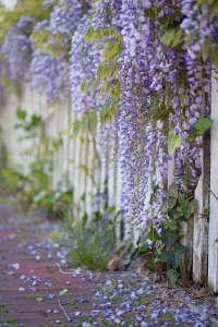 Hardscaping 101: Picket Fences | Gardenista