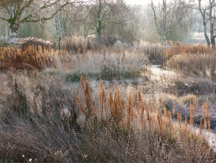 piet-oudolf-hummelo-winter-grasses-gardenista