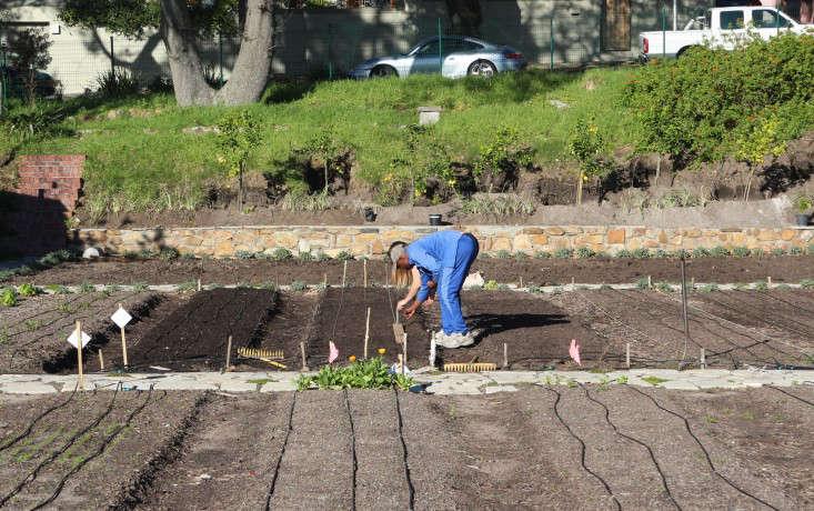 planting-oranjezicht-city-farm-gardenista
