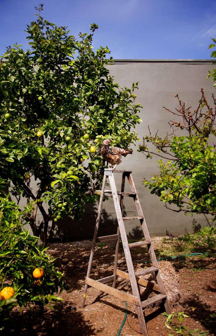 pollinate-orchard-liesa-johannssen-gardenista